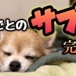 【2021年1〜3月版】各部位の犬用サプリメントのオススメまとめ【限定品あり】