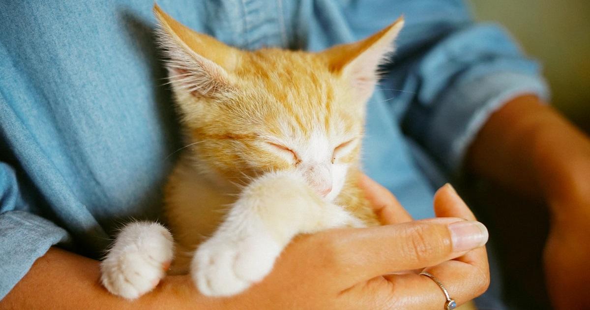 猫のペットロスのカウンセラー・支援団体