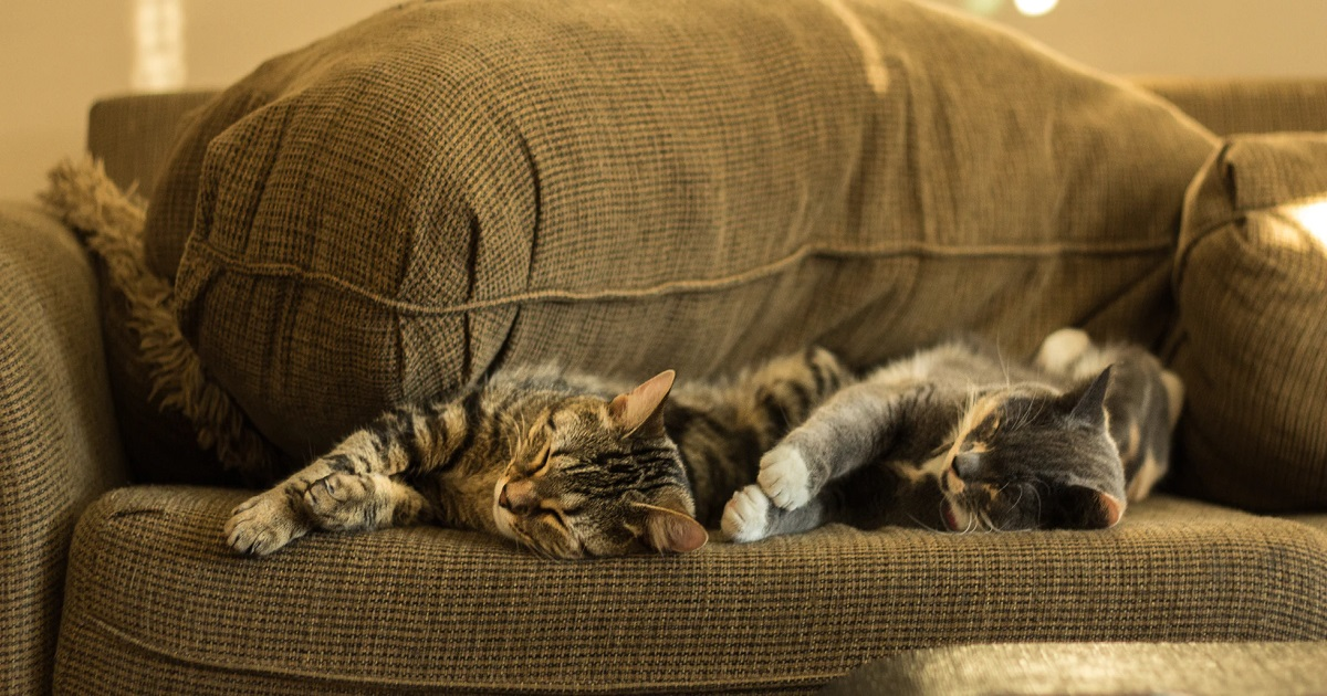 愛猫を亡くすときは誰もが悲しい