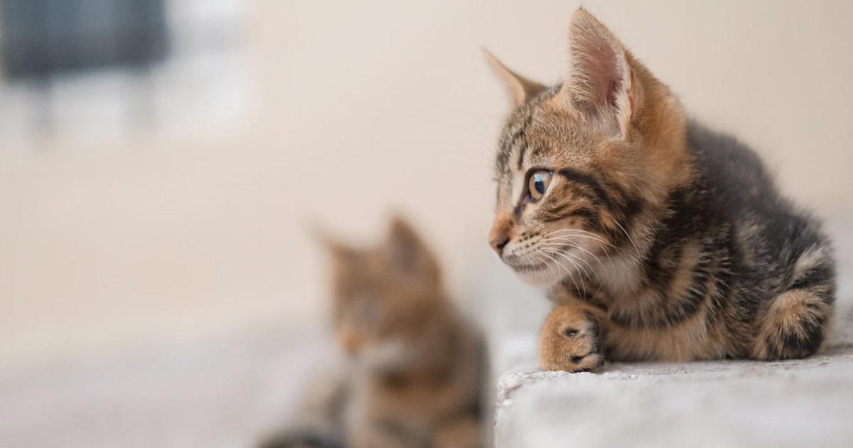 猫のペットロスによる心情・体調の変化