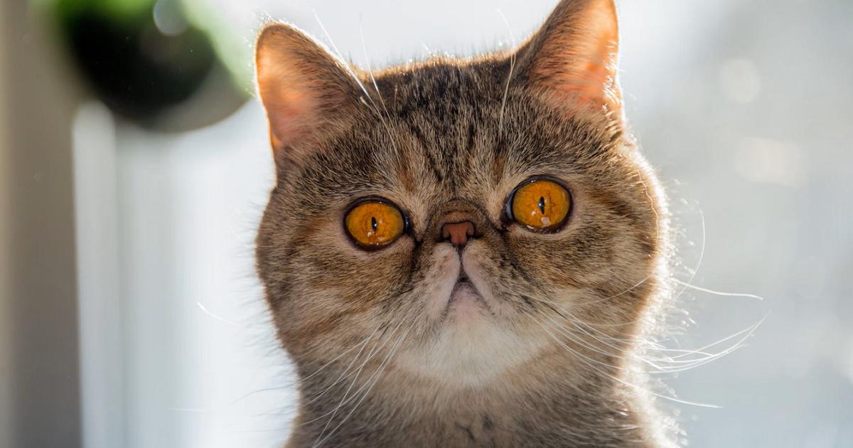 猫にワンちゅーるを与えてはいけない危険な理由